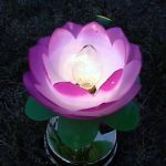 2002-7-20-lotuslight0719