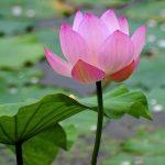 lotus22x2x