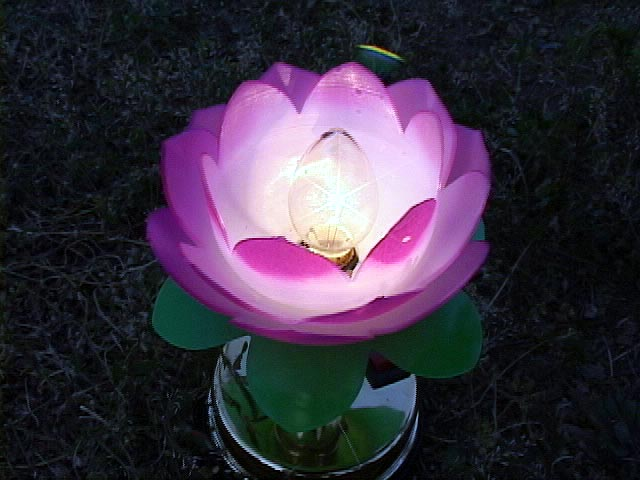 2002-7-20-lotuslight0719