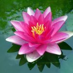The beauty of cultivation in Falun Dafa.